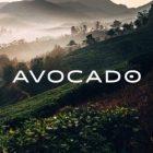 Best Mattress Toppers - Avocado Logo