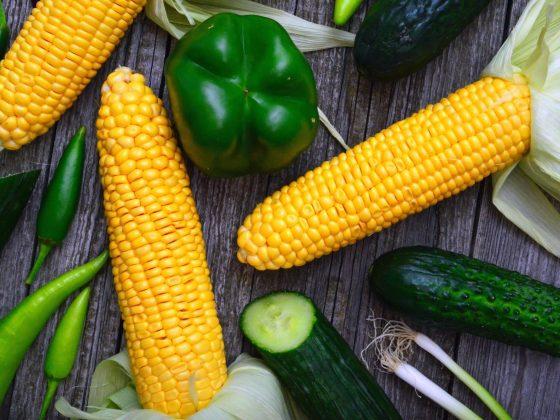 GMO Statistics