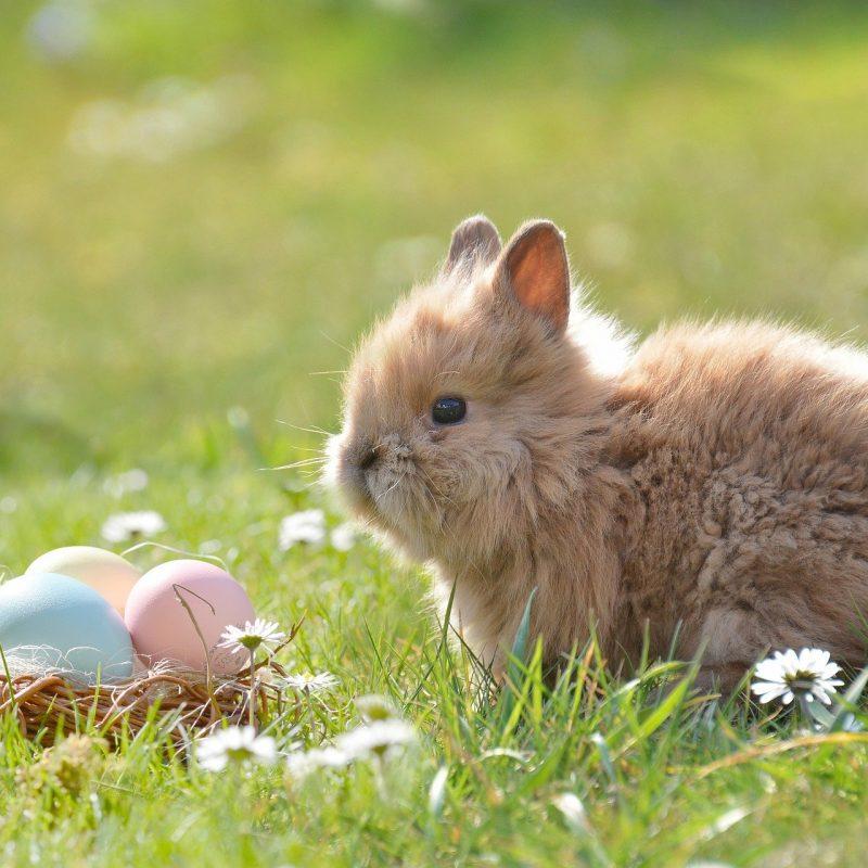 Easter Facts - Featured