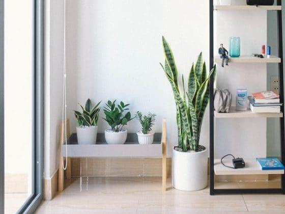 Houseplant for a Healthier Home