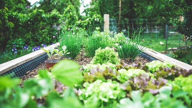 Herb Garden Ideas - Raised Bed Garden