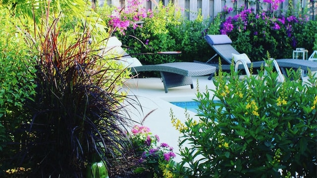 Backyard Ideas - Lush Landscape