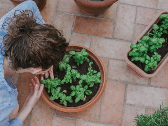 Herb Garden Ideas - Featured