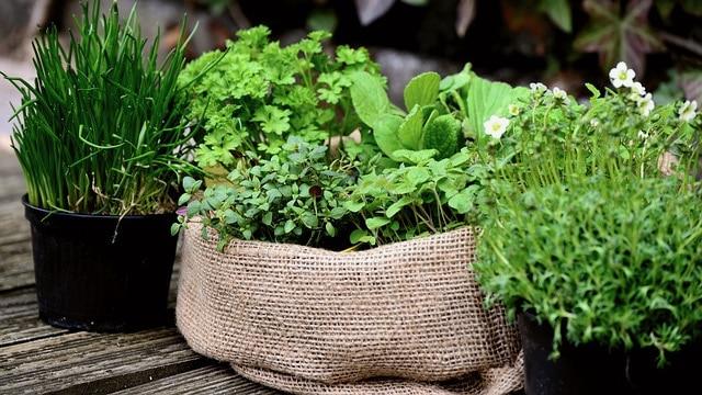 Herb Garden Ideas - Organic Materials