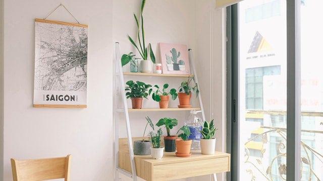 Herb Garden Ideas - Plants on Shelves