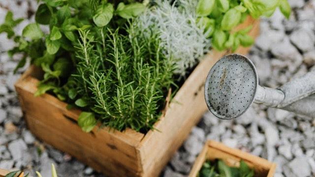 Herb Garden Ideas - Wooden Boxes
