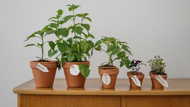 Herb Garden Ideas - Potted Plants