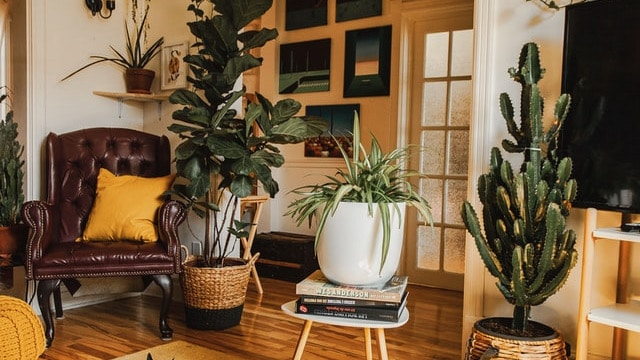 Eclectic Style - Plants